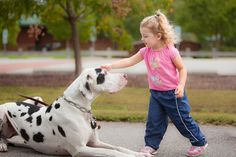 My daughter meeting a Great Dane at the park - Imgur