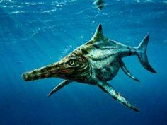 New Jurassic species of marine reptile identified from fossils in Scotland