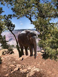 Elephant enjoying the Grand  Canyon by Kate Hubbard by KateHubbardPhotos on Etsy