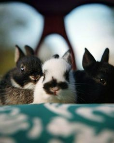 The Itty Bitty Bunneh Committee is here for your daily dose of cuteness.