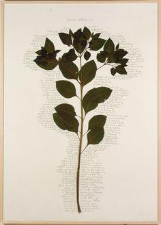 1999-jpeg-collage-belladonna-460.jpg (460×642)