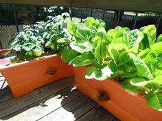 descubre los cultivos ms fciles para empezar tu huerto en casa