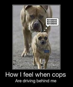 Funny Pictures Of Dogs - 23 Pics - Funny Pictures Of Animals | Fun Claw buy facebook likes