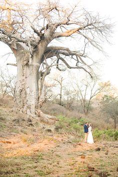 Pafuri Bush wedding amongst the Baobab Trees Bush Wedding, Tree Wedding, Baobab Tree, Survival Guide, Madagascar, South Africa, Safari, Trees, River