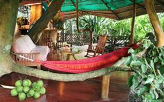 Tree House Lodge, Limón, Costa Rica - World's Coolest Tree-House Hotels | Travel + Leisure