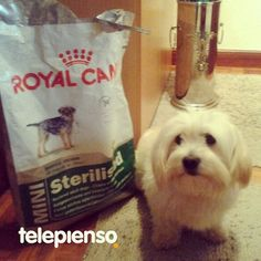 http://www.telepienso.com/products/royal-canin-mini-sterilised