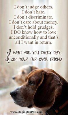 Fur-ever Friend