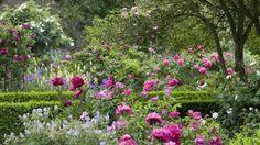 The Rose Garden in June at Sissinghurst Castle Garden