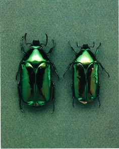 Insects: The taste of Petrol and Porcelain | Interior design, Vintage Sets and Unique Pieces www.petrolandporcelain.com  Emerald beetles