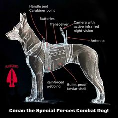 Kids Books: Meet Conan the Special Forces Combat DOG! Special Forces, Conan, Meet, Dogs, Movie Posters, Film Poster, Doggies, Pet Dogs, Dog