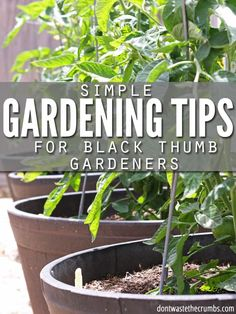 "As with any life lesson, I'm learning leaps and bounds about gardening – both what TO do, and what NOT to do – and I hope it's helping you guys along the way… even if the ""help"" is merely encouragement that gardening isn't easy and it's okay if you're not good at it!! I'm sharing my gardening tips for people who can't garden and it's just the pick-me-up you might need if your harvest isn't exactly going as planned. #harvest #gardening #gardeningtips #gardeningtipsforbeginners #planting Growing Tomatoes In Containers, Growing Vegetables, Low Maintenance Garden Design, Vegetable Garden Planning, Vegetable Gardening, Flower Gardening, Meteor Garden 2018, Organic Gardening Tips, Urban Gardening"