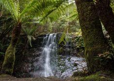 The small fern guarded Silver Falls is a highlight of the Mountain Gems tour of kunanyi / Mt Wellington Hobart Tasmania. Harbor Beach, Silver Falls, Beach Villa, Tasmania, Walk On, East Coast, Things To Do, Waterfall, Tours