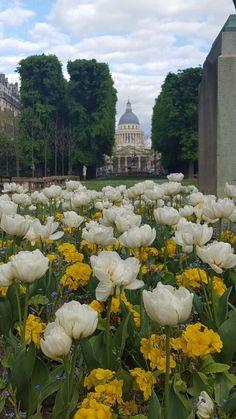 Tulips in the Jardin de Luxembourg, Paris