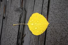 Water Droplets on Aspen Leaf Art Print by The Blonde Dutch Girl