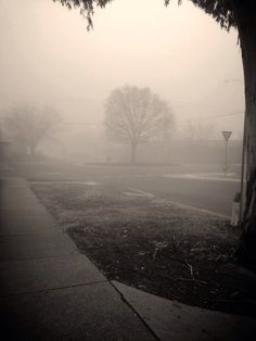 Morbid and Moody foggy morning in Sunbury Victoria Australia.  Taken By Nikki Waters Photography