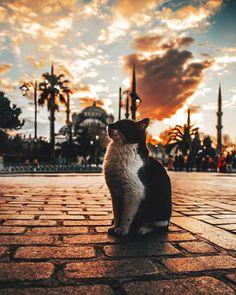 Being a street cat in İstanbul by Ömer Yeşilırmak. (via Instagram - omeryesilirmak_) #turkey #türkiye #istanbul #cat #kedi #sultanahmetmosque #sultanahmetcamii #travel #trip #journey
