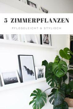 Diese 5 Zimmerpflanzen verwandeln deine Wohnung in eine grüne Oase und sind für ihre besonderen Eigenschaften bekannt. Außerdem verrate ich dir, wie du Monstera & Co am Besten pflegst und wo sie es sich am Liebsten gemütlich machen.