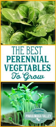Imagine growing vegetables that require just about the same amount of care as perennial flowers and shrubs—no annual tilling and planting. They thrive and produce abundant and nutritious crops throughout the season. Once established in the proper site and climate, perennial vegetables planted can be virtually indestructible despite neglect.