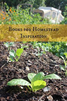 I'm constantly inspired by the amazing homesteading books that are in the world, and I love reading and learning from them. Today, I share a few of my favorite homesteading books for inspiration.