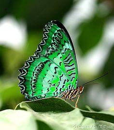 Mariposa verde en la hoja      YosoyYuyee!!!!