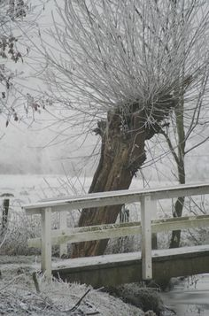 winter utrecht uithof
