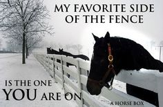 My favorite side of the fence. My Horse, Horse Love, Horse Girl, Horse Riding, Most Beautiful Animals, Beautiful Horses, Equestrian Quotes, Equestrian Style, Horse Quotes