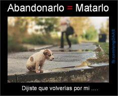 Abandonar a tu perro es igual a matarlo: Dijiste que volverías por mi...