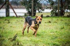 Un chien aveugle et affamé, découvert dans un tas d'ordures après y avoir passé un mois entier, se remet miraculeusement de ses aventures.