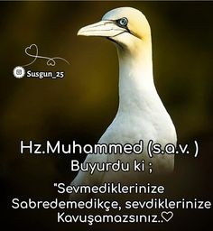 Islam, Animals, Animales, Animaux, Animal, Animais