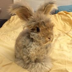 Meet Wally, The Adorable Bunny With The Most Stylish Haircut Around.