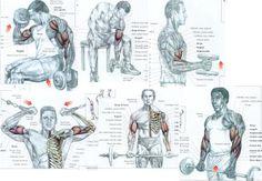 VIVER BEM COM ENERGIA - FITNESS : Treino de Bíceps