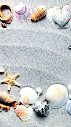 Seashell and sand wallpaper