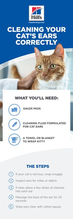 Cats are great self-groomers, but one place they can't groom is their ears. Knowing how to clean a cat's ears is an important skill to have if you need to lend a helping hand. Cleaning a cat's… Kittens Cutest, Cats And Kittens, Cute Cats, Clean Cat Ears, Cat Health, Health Care, Cat Facts, Funny Animal Videos, Beautiful Cats