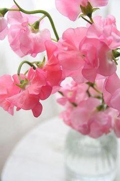 Sweetpeas- shyness, delicate pleasures