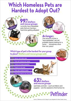 Learn more about how you can #help pets