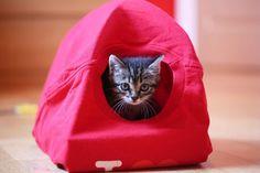 Fabriquer une tente pour son chat en récup, le mien adore s'y cacher !