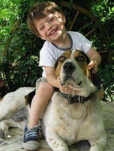 Terapias con animales domesticos