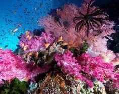 espetáculo de cores da foto subaquática