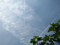 chemtrail London July 2013 How To Make Clouds, North London, Plant Leaves, Plants, Plant, Planets