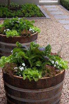 How To Make An Attractive Edible Garden Better Homes And
