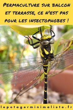 Faire de la permaculture sur un balcon ou une terrasse, c'est aussi tolérer une cohabitation avec les insectes 🐞 😱 Belle Photo Instagram, Pots, Blog, Animals, Insects, Flowers, Animales, Animaux, Blogging