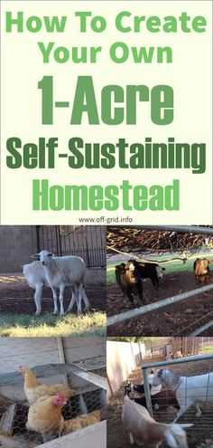 """How To Create Your Own Self-Sustaining """"Micro Farm"""" Homestead - Modern Homestead Layout, Homestead Farm, Off Grid Homestead, Homestead Survival, Self Sustaining Farm, Best Farm Dogs, Forage Crops, Sustainable Farming, Sustainable Living"""
