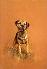 BORDER TERRIER DOG FINE ART LIMITED EDITION PRINT -