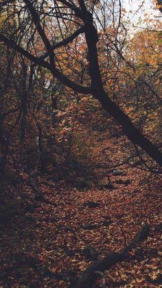Best Autumn Iphone Wallpaper ideas on Pinterest Fall