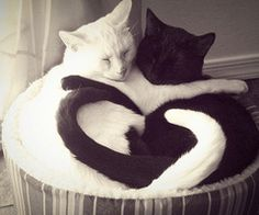 Ebony & Ivory...Fit together in Purrrfect Harmony :)