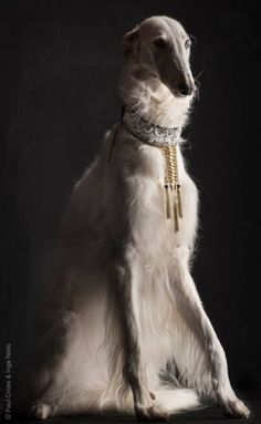 "stupidmarigolds: ""Borzoi por Paul Croes"""