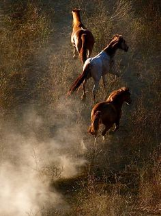 Wild horses - photo: Astrid Harrison