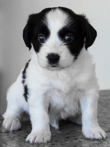 Thinking about getting a puppy check out this information