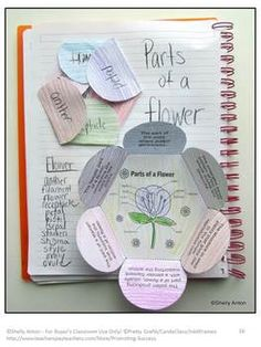 Flowers: Your students will love this hands-on plants interactive notebook activity to learn definitions of the parts of a flower. Students will color then cut out the two flower shapes. After it is attached to their notebooks, they will need to identify which part of the flower the definition is describing and write it on the flap. A separate word bank is provided if needed.
