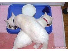 Kattenlogica